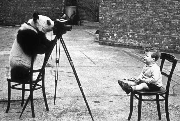 In December 1938, five giant pandas were smuggled out of China to England. Four of them were bought by London Zoo. Photographer Bert Hardy's son, Mike Hardy, poses for a phot with Ming one of the pandas at London Zoo.<br><br>  Picture: BERT HARDY/GETTY IMAGES