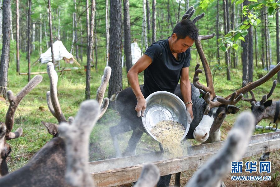走向我们的小康生活 走向我们的小康生活|走出山林奔小康——鄂温克族迎来新生活
