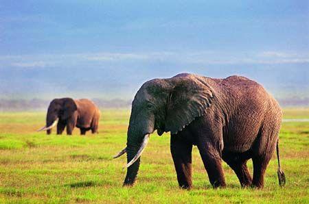 在南非与野生动物亲密接触
