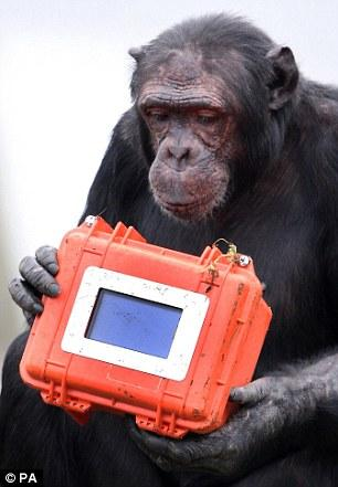 Chimpanzee director shoots own footage CCTV-International