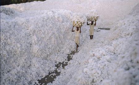 StateofGujarat,India(PhotoSource:huanqiu.com)