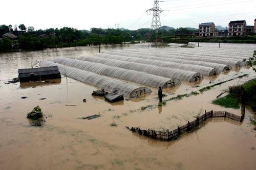 A strawberry field in Loudi, Central China's Hunan province is flooded on May 13, 2010.