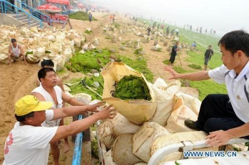 Workers load bags of cleared green algae in Qingdao, east China's Shandong Province, on June 29, 2010. Local authorities and residents in Qingdao City have been struggling to remove a large mass of green algae that has come ashore on the beaches of the popular coastal tourist destination in Shandong. The North China Sea Branch (NCSB) of the State Oceanic Administration said Monday that the floating green algae covered a 400-square-km area in the waters to the south of Qingdao.(Xinhua/Li Ziheng)