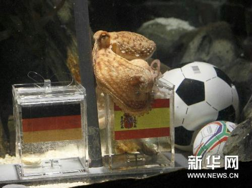 "Two year-old octopus Paul, the so-called ""octopus oracle"" predicts Spain's victory in their 2010 World Cup semi-final soccer match against Germany by choosing a mussel, from a glass box decorated with the Spanish national flag instead of a glass box with the German flag, at the Sea Life Aquarium in the western German city of Oberhausen July 6, 2010.(Source: xinhuanet.com)"