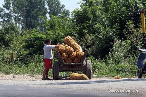 Farmers from Lunguletu Village, a well known place for growing potatoes about 40 km northwest of Bucharest, capital of Romania, sell potatoes near a national road on July 11, 2010. Farmers from the regions which are not hit by floods are harvesting faster to save their farm produce from being possibly watered in face of a new yellow code for rain.(Xinhua/Gabriel Petrescu)