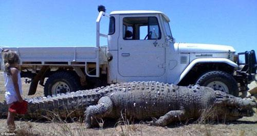 Photo shows a 22-feet-long (6.7-meter-long) crocodile, which terrorized locals in a remote community in Australia. It has been shot by farmers. But two more giant crocodiles, even bigger than this one, are believed to be still there. (Photo: CRI Online)