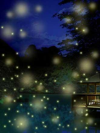 Fireflies have been considered quite an out-of-the-ordinary idea by an increasing number of young people.
