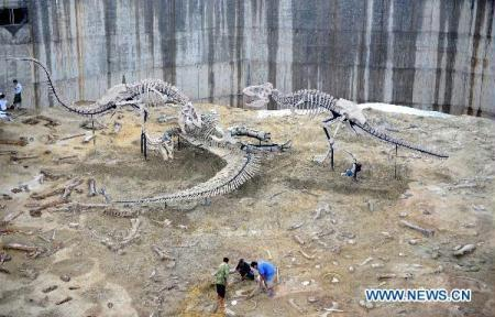 People arrange the skeletons of the tyrannosaurus in Zhucheng, east China's Shandong Province, Aug. 27, 2010. At least ten species of dinosaurs, including ceratopsid dinosaur, tyrannosaurus, duck-billed dinosaur, ankylosaurus and coelurosaurs, had been confirmed during the third large-scale exploration in Zhucheng from January of 2008, announced on a news briefing of the exploration achivements in Zhucheng on Friday. (Xinhua/Fan Changguo)