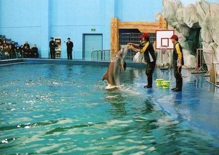 动态 中国 西安/海底隧道是欣赏动态海洋生物的最佳地点。