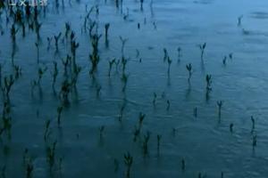 探秘黄河源