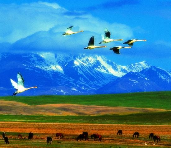 ps新疆独特风景
