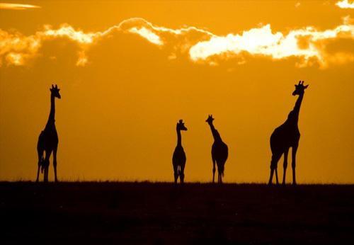 走进非洲:看肯尼亚动物大迁徙