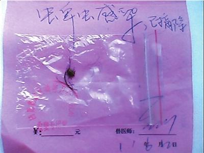 """回龙观防疫站出示的诊断书显示,陆先生家被咬的宠物狗""""蜱虫感染,已摘除""""。"""