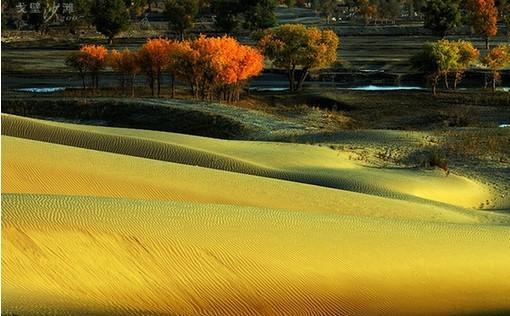 美景画刊塔里木河 生命之河