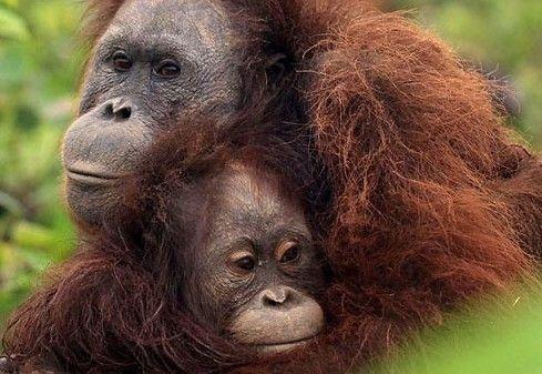 救救濒临灭绝动物