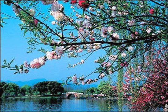 杭州西湖桃花开 十锦塘处赏桃来
