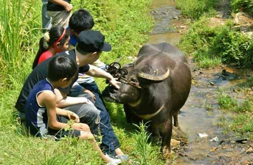 和小朋友一起体验放牛