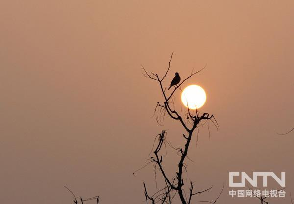 [摄影作品]作者:刘肖坤《枯藤 老树 昏鸦》
