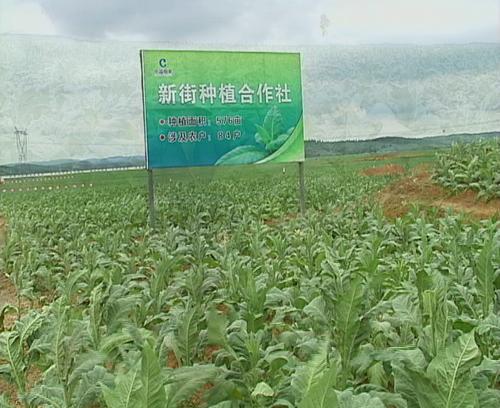 神州采风 泸西县农民专业合作社