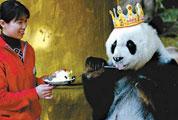 <a href=http://www.cctv.com/program/natureandscience/20080125/102088.shtml>Giant Panda Basi</a>