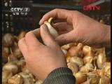 [农广天地]郁金香鲜切花促成栽培技术(20110928)