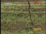 陕西:不一样的猕猴桃