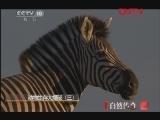 《自然传奇》 20120124 动物生存大揭秘(三)
