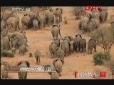 《自然传奇》 20120125 动物生存大揭秘(四)