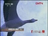 动物生存大揭秘(九)[自然传奇] 20120130