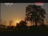 《人与自然》 20120204 人物亲历——大蜜蜂家族(上)