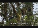 BBC纪录片《南太平洋》 - 行者 - ylh630的博客