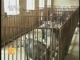 荷包猪养殖技术