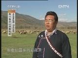 凉山半细毛羊养殖技术讲座