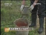 张秀芬甲鱼养殖:急性女人放慢脚步去挣钱