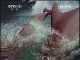 《人与自然》 20120611 自然发现 冷血