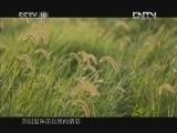 《茶叶之路》 20120802 第二十五集 撤帐婚俗