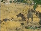 《人与自然》 20120818 自然发现 与古兽同行(五)
