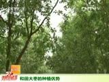 和田大枣的种植优势