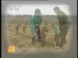 [农广天地]大蒜、菠菜、西瓜、玉米四种四收技术(20120925)
