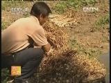 [农广天地]秋播大蒜如何出好苗、大蒜早衰原因及预防(20121015)