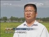 李永军立体种养生财有道:稻田里的立体财富