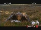 《自然传奇》 20121109  动物生存奥秘(6)