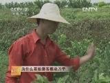 番石榴种植技术科技苑:为什么要给番石榴动刀子