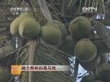 椰树种植技术科技苑:矮个椰树的喜与忧