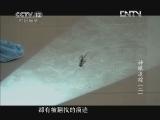 《见证》 20121119 神眼追踪(二)