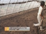 农广天地,温室白萝卜栽培技术