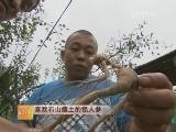 野山参种植技术:喜欢石山瘦土的怪人参
