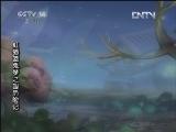虹猫蓝兔梦之国历险记 48 动画剧场 20121122