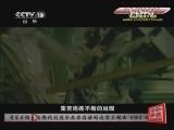 [音乐人生]悟 刘德华 20121125