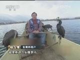 杨玉藩捕鱼生财有道,洱海湖畔的鱼鹰情缘